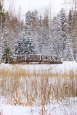 Small foot-bridge on background nature — Stock Photo