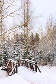 Winternatur — Stockfoto