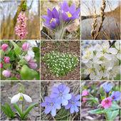 Flowers of springs — Stock Photo