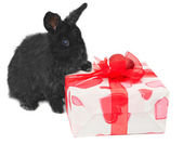 Little rabbit near the box with gift — Stok fotoğraf