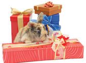 Little rabbit between the boxes with gifts — Stok fotoğraf