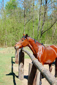 Beautiful horse in paddock — Stock Photo