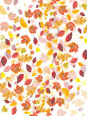 Whirled fall leafs on white background — Stock Photo