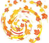 Maple fall leafs — Stock Photo
