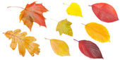 Set of yellow and red leaves — Stock Photo