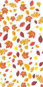 Background of fall leaves — Stock Photo