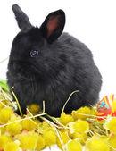 Black bunny on yellow plants — Stock fotografie