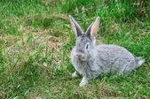 Fluffy rabbit on the green grass — Stock Photo