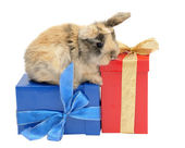 Little rabbit on the boxes with gifts — Stock Photo