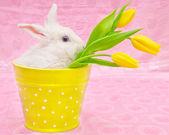 Rabbit and yellow tulips — Stock Photo