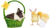 Králík v zelené koš a pěkný kuřata — Stock fotografie