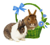 Rabbits in basket with blue flowers and bow — Stock Photo