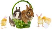 Kaniner i grön korg och vackra kycklingar — Stockfoto