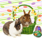 Rabbits rabbits in basket with narcissus and eggs — Stock Photo