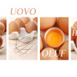 Egg in four languages — Stock Photo #10227014