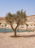 Oasis in the Desert — Stock Photo