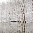 Pond in Winter — Stock Photo