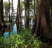 Swampy — Stock Photo