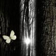 Spiritual butterfly near a tree gap light - Stock Photo