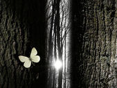 Spiritual butterfly near a tree gap light — Stock Photo