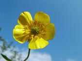 Parçalı bulutlu gökyüzü kadar tek sarı çiçek — Stok fotoğraf