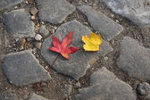 Two autumnal leaves — Stock Photo