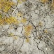 Dehydrated grass on cracked ground — Stock Photo