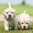 Two nice puppies — Stock Photo