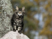 Cat on the stone — Stock Photo