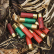 Royalty-Free Stock Photo: Shotgun shells.