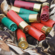 Stock Photo: Shotgun shells.