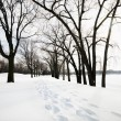Snow covered trail. - Stock Photo