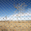 Foto Stock: Brush entagled in fence.