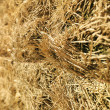 Bales of hay. - Stock Photo