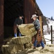 Attractive Couple Moving Hay Bales - Stock Photo