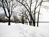 Snow covered trail. — Stock Photo