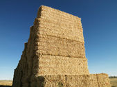 Bales of hay. — Stock Photo