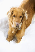 Dog in snow. — Stock Photo