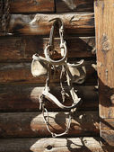 Hanging Bridle with Blinders — Stock Photo