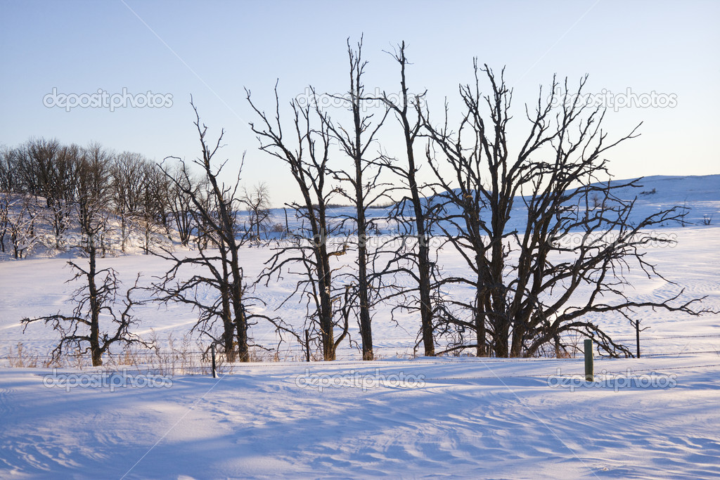 Leafless snow covered trees in winter. — Stock Photo #9224901