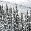 Snow covered trees. — Stock Photo