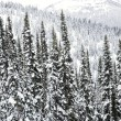 Foto Stock: Snow covered trees.