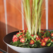 Flowers and Plants in Black Bowl - Stock Photo