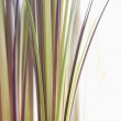 Decorative grass. — Stock fotografie