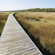 Boardwalk at marsh. — Stock Photo #9276730