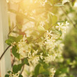 Sun through flowers. - Stock Photo