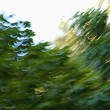 Blurred abstract trees. - Stock Photo