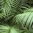 Tropical plant. - Stock Photo