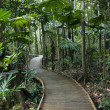 Постер, плакат: Boardwalk in rainforest