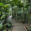 Boardwalk in rainforest. — Stock Photo